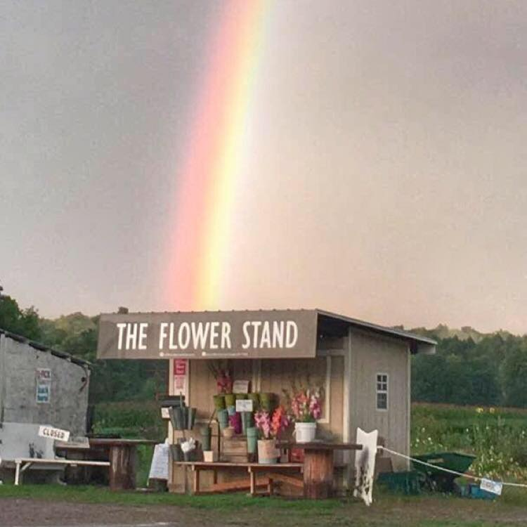 Rainbow at the Flower Stand